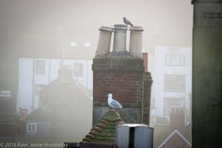 Chimney and Seagull in the Mist