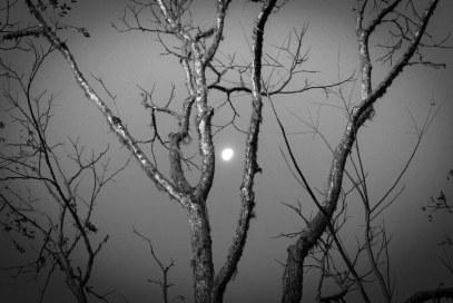 Tree and Moon