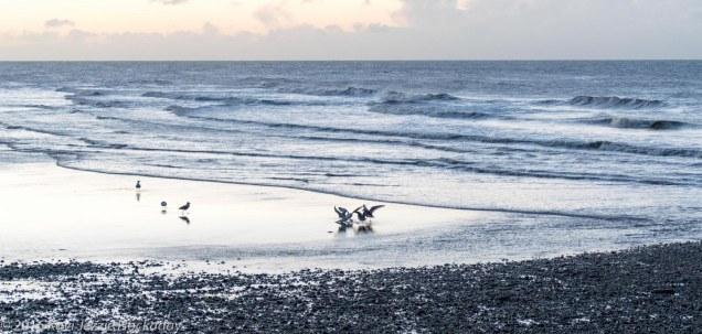 Beach, Gulls, Sea, Sky