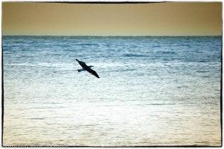 Bird on the Wing