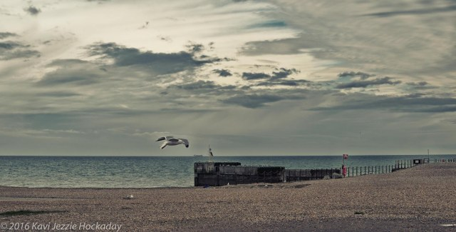 The Seagull and the Sky
