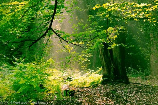 Sunbeams in the green wood copy