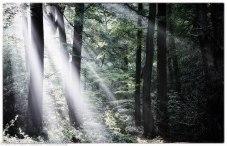 Sunbeams in the wood copy