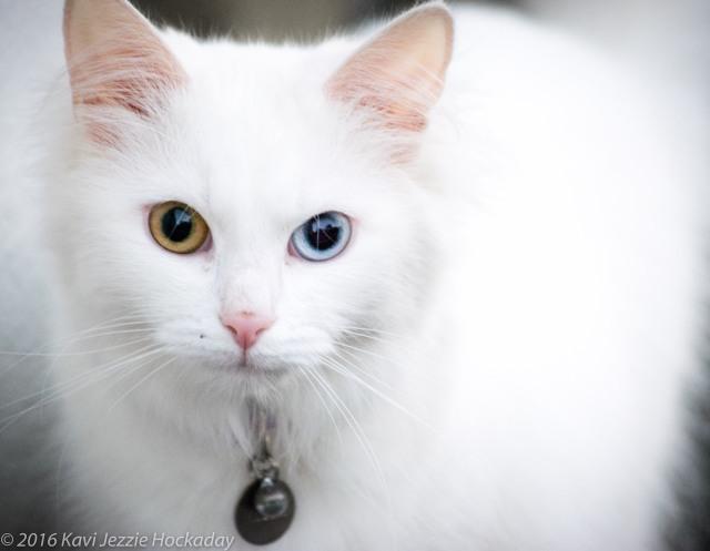 white-cat-1