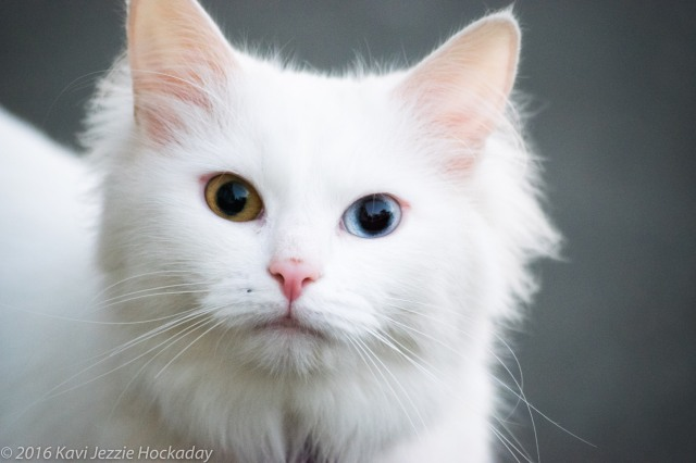 white-cat-2-copy