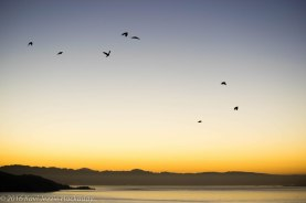 dawn-from-sausalito