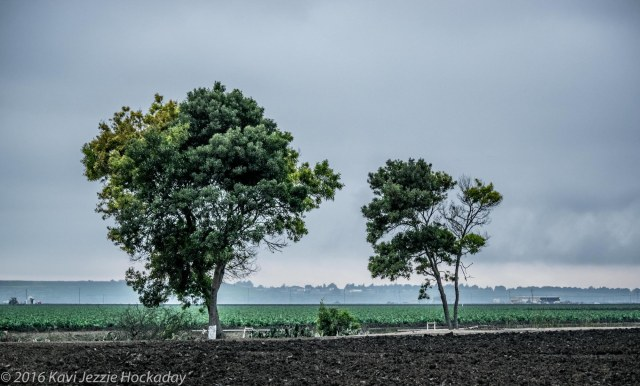 trees-in-the-field