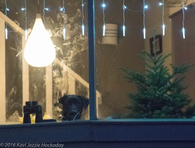 dog-in-the-window