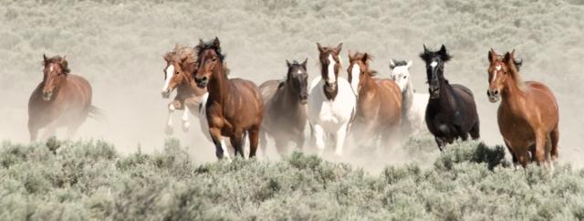 wildhorsesrunning-mustangmonumentcaaronmillar