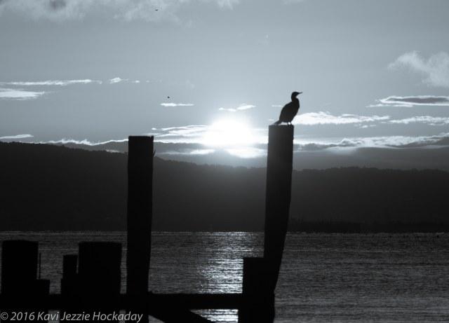 sunrise-sausalito-black-and-white-2
