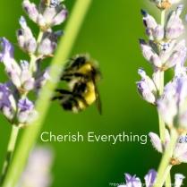 cherish everything
